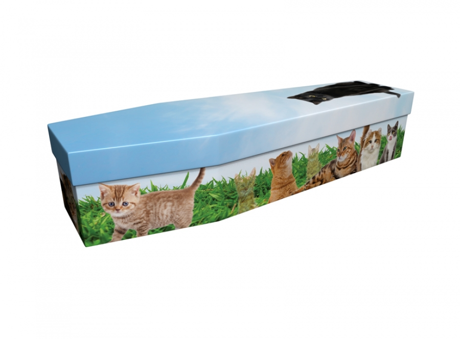 Cardboard coffin - Cats - 3878