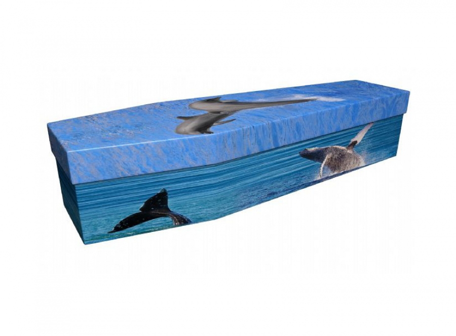 Cardboard coffin - Whales & Dolphins - 3915