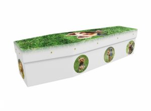 Cardboard coffin - Yorkshire Terrier - 3564